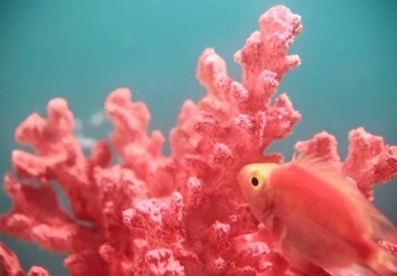Una palette per salvare i coralli