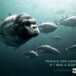 I più bei cartelloni del WWF