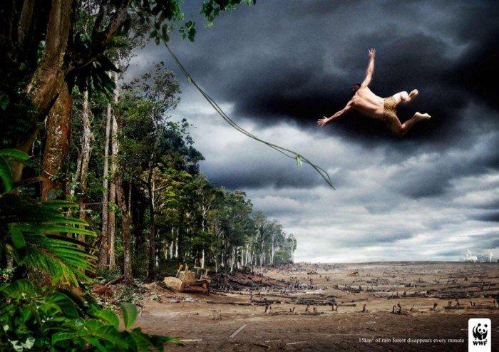 Il problema della deforestazione