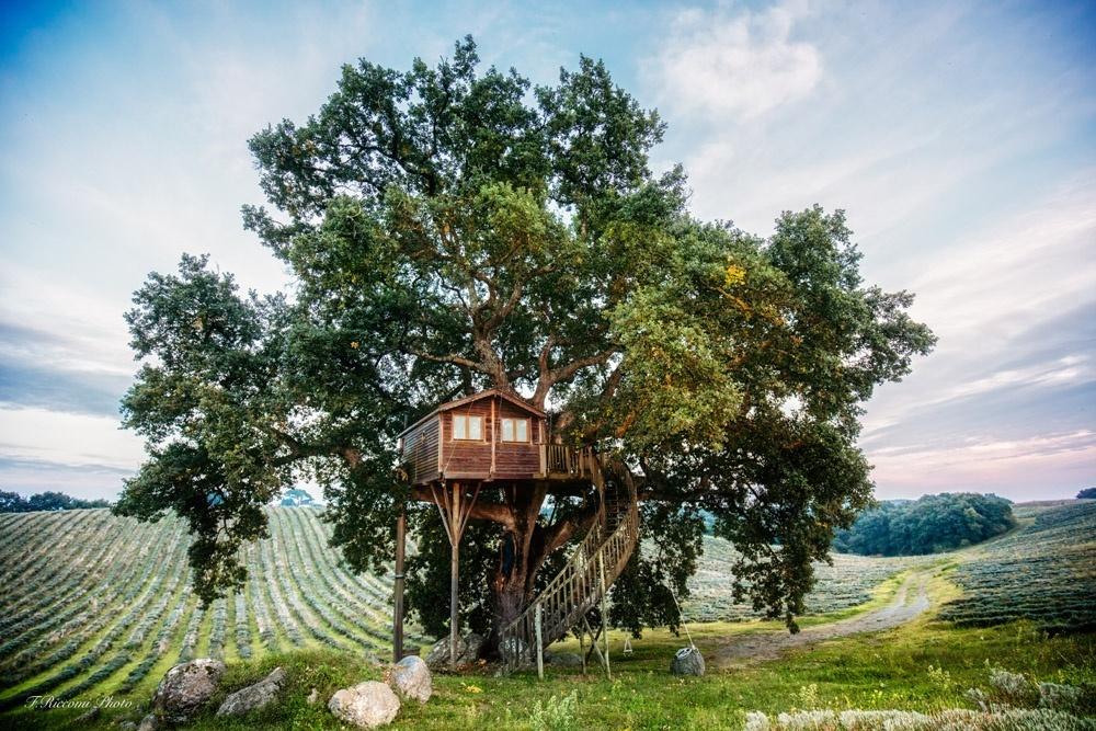 casa sull'albero tra la lavanda